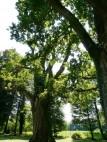 Alte Baumgruppen im Park